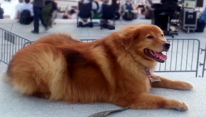 Truman is the Thompson family dog, adopted in 2002.